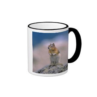 Canada, Alberta, Banff NP. A Golden-mantle Ringer Mug