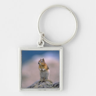 Canada, Alberta, Banff NP. A Golden-mantle Silver-Colored Square Keychain
