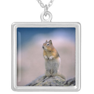 Canada, Alberta, Banff NP. A Golden-mantle Silver Plated Necklace