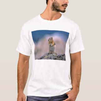 Canada, Alberta, Banff NP. A Golden-mantle T-Shirt