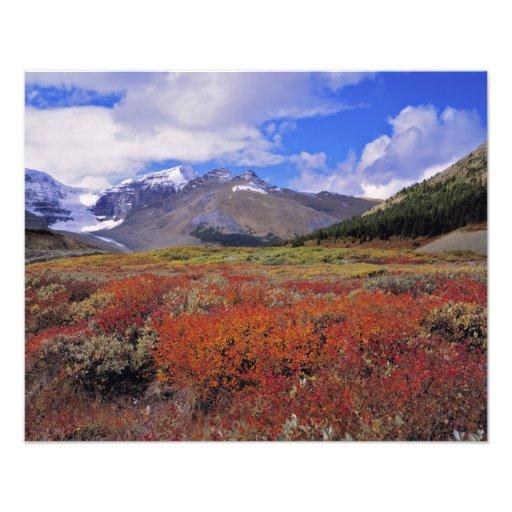 Canadá, Alberta, Banff NP. Floración de los aránda Arte Fotografico
