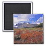Canadá, Alberta, Banff NP. Floración de los aránda Imanes De Nevera