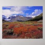 Canadá, Alberta, Banff NP. Floración de los aránda Poster