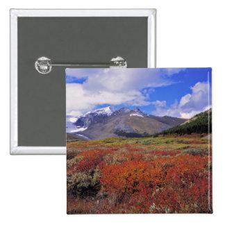 Canadá, Alberta, Banff NP. Floración de los aránda Pin Cuadrada 5 Cm