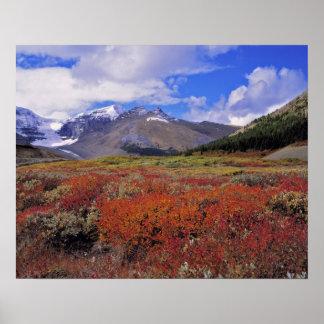 Canadá, Alberta, Banff NP. Floración de los aránda Póster