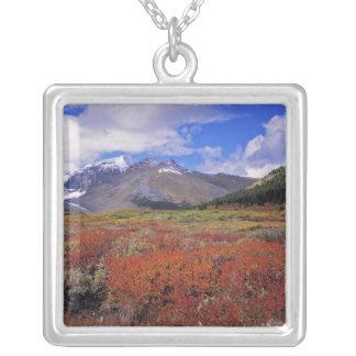 Canadá, Alberta, Banff NP. Floración de los Collar Plateado