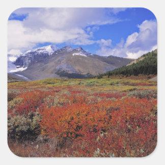 Canadá, Alberta, Banff NP. Floración de los Pegatina Cuadradas Personalizada