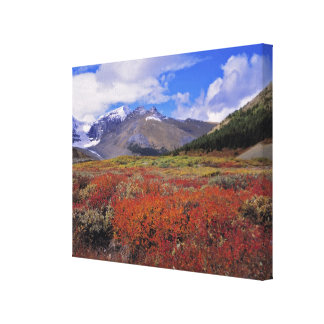 Canada, Alberta, Banff NP. Huckleberries bloom Canvas Print