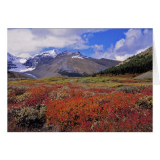 Canada, Alberta, Banff NP. Huckleberries bloom Card