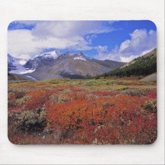 Canada, Alberta, Banff NP. Huckleberries bloom Mouse Pad
