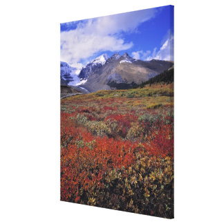 Canada, Alberta, Banff NP. Huckleberries provide Canvas Print