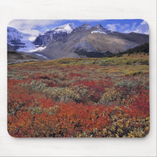 Canada, Alberta, Banff NP. Huckleberries provide Mouse Pad