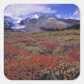 Canadá, Alberta, Banff NP. Los arándanos Calcomanias Cuadradas