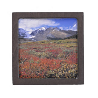 Canadá, Alberta, Banff NP. Los arándanos proporcio Caja De Recuerdo De Calidad