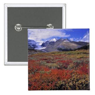 Canadá, Alberta, Banff NP. Los arándanos proporcio Pin Cuadrado