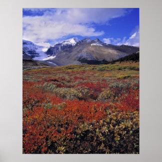 Canadá, Alberta, Banff NP. Los arándanos proporcio Póster
