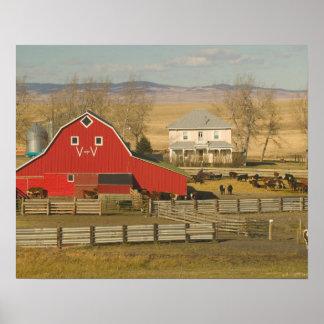 Canadá, Alberta, cala de Pincher: Granero y rancho Poster
