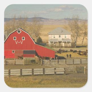 Canadá, Alberta, cala de Pincher: Granero y rancho Pegatina Cuadrada