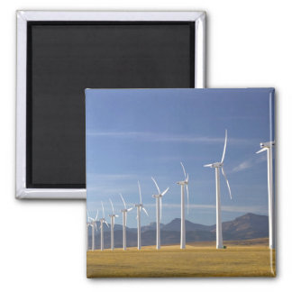 Canada, Alberta, Crowsnest Pass Area: Cowley 2 Inch Square Magnet