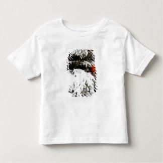 Canadá, Alberta, jaspe, jaspe NP. Fairmont 2 Camisas