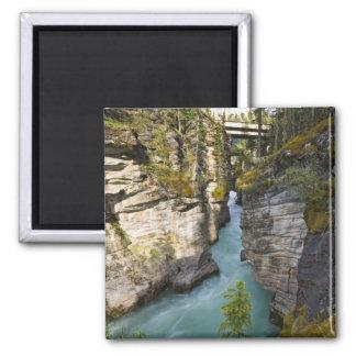 Canada, Alberta, Jasper National Park, Athabasca 2 Magnet
