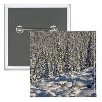 Canada, Alberta, Jasper National Park. Button