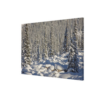 Canada, Alberta, Jasper National Park. Canvas Print