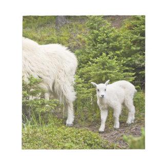 Canada, Alberta, Jasper National Park, Mountain 2 Note Pad