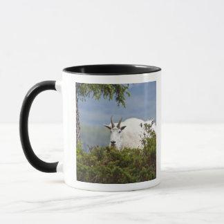 Canada, Alberta, Jasper National Park, Mountain 3 Mug