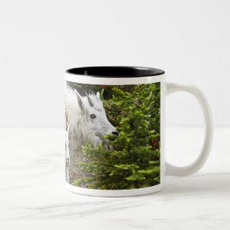 Canada, Alberta, Jasper National Park, Mountain Two-Tone Coffee Mug