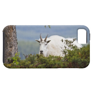 Canadá, Alberta, parque nacional de jaspe, montaña Funda Para iPhone SE/5/5s