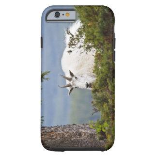 Canadá, Alberta, parque nacional de jaspe, montaña Funda Resistente iPhone 6