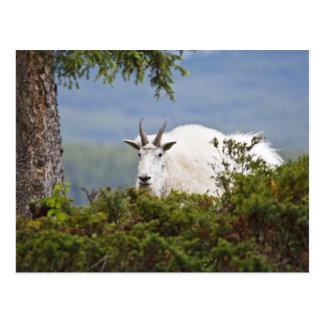 Canadá, Alberta, parque nacional de jaspe, montaña Tarjeta Postal