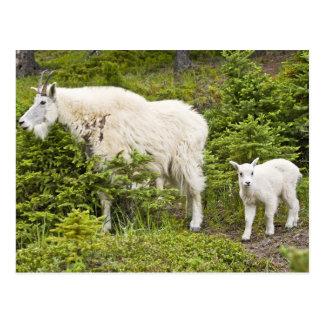 Canadá, Alberta, parque nacional de jaspe, montaña Tarjetas Postales