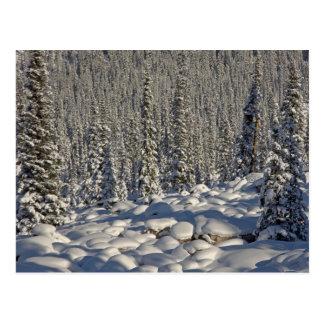 Canadá, Alberta, parque nacional de jaspe Tarjeta Postal