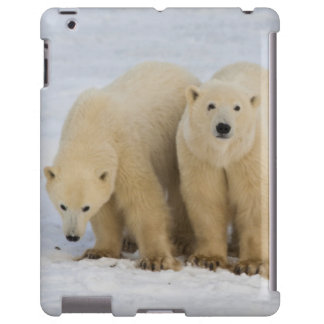 Canadá, Bahía de Hudson. Madre del oso polar con d Funda Para iPad