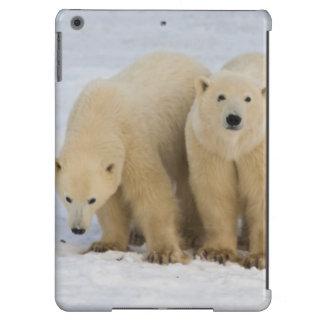 Canadá, Bahía de Hudson. Madre del oso polar con d Funda Para iPad Air