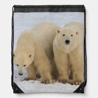 Canadá Bahía de Hudson Madre del oso polar con d Mochila