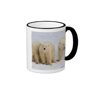 Canadá, Bahía de Hudson. Madre del oso polar con d Taza De Café