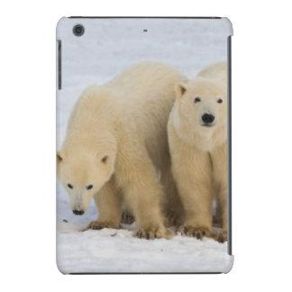 Canadá, Bahía de Hudson. Madre del oso polar con Fundas De iPad Mini