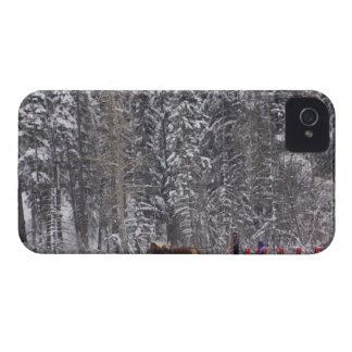 Canada, Banff. Sleigh rides at Martin Stables. Case-Mate iPhone 4 Case