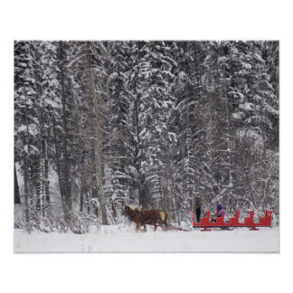 Canada Banff Sleigh rides at Martin Stables Poster