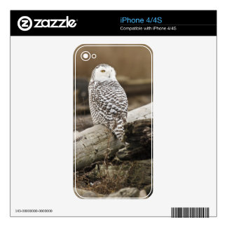 Canada, Boundary Bay, Snowy Owl iPhone 4S Skin