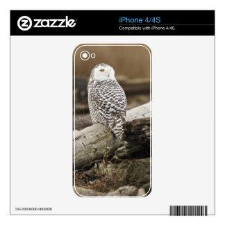 Canada, Boundary Bay, Snowy Owl iPhone 4S Skin