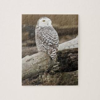 Canada, Boundary Bay, Snowy Owl Jigsaw Puzzle