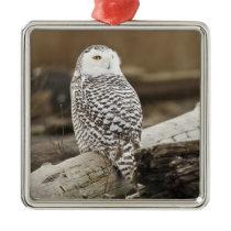 Canada, Boundary Bay, Snowy Owl Metal Ornament