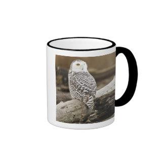 Canada, Boundary Bay, Snowy Owl Mugs