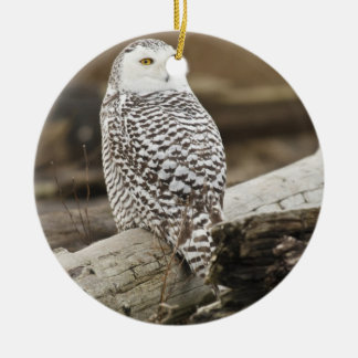Canada, Boundary Bay, Snowy Owl Double-Sided Ceramic Round Christmas Ornament