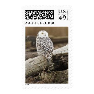 Canada, Boundary Bay, Snowy Owl Postage