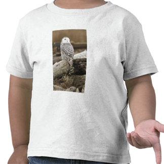 Canada, Boundary Bay, Snowy Owl Shirt